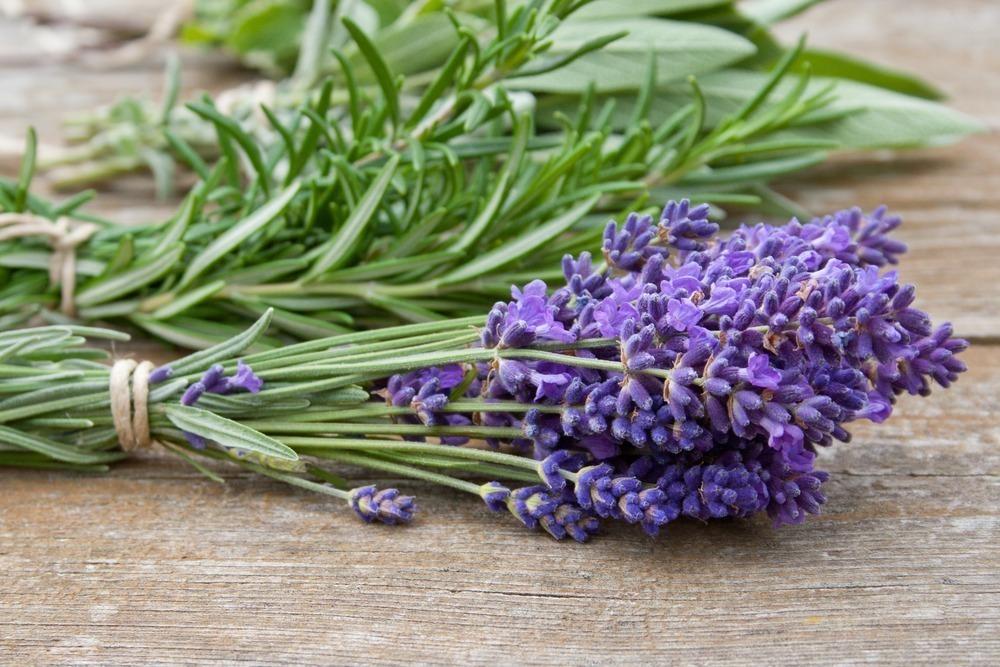 planta medicinal Alfazema