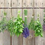 Ervas Aromáticas Deliciosas e Mais Saudáveis.