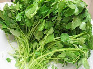 Benefícios do Agrião Para que Serve o vegetal