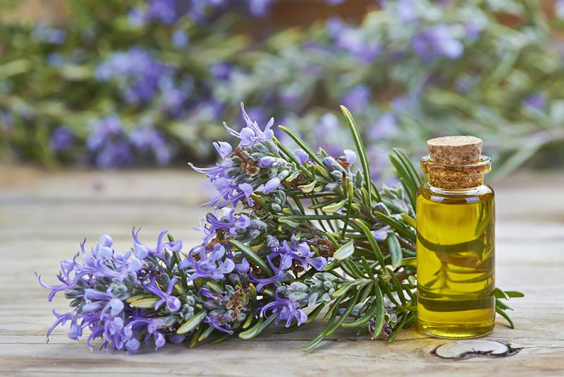 oleo de alecrim beneficios