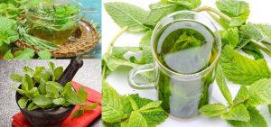 chá verde beneficios para a pele