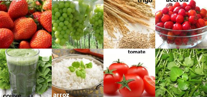 alimentos antioxidantes para emagrecer