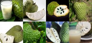 graviola fruta como comer