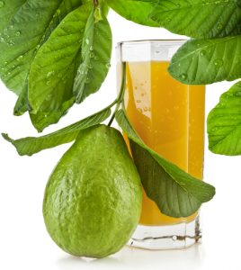 Chá de Folha de Goiaba Benefícios