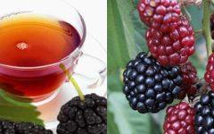 Chá de Amora Benefícios,Contra Indicação e Cuidados
