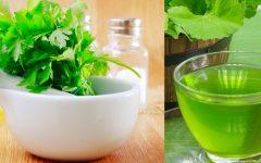Chá de Salsa: Benefícios,Indicação e Dicas