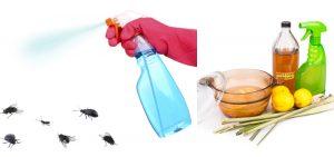 repelente caseiro para mosquito