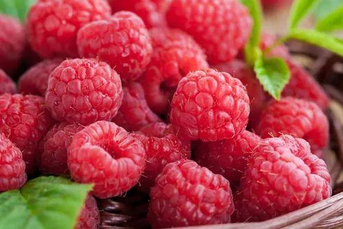 Framboesa Fruta