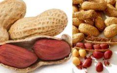 Os benefícios do amendoim para a sua saúde