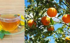 Folha de laranja: Veja os benefícios dessa planta para a saúde?
