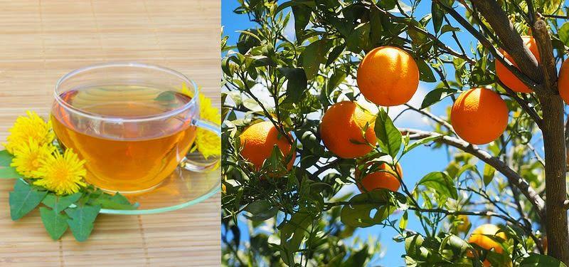 cha de folha de laranjeira
