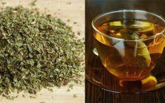 Chá de Orégano Para Tosse, Refluxo e Mais Benefícios.