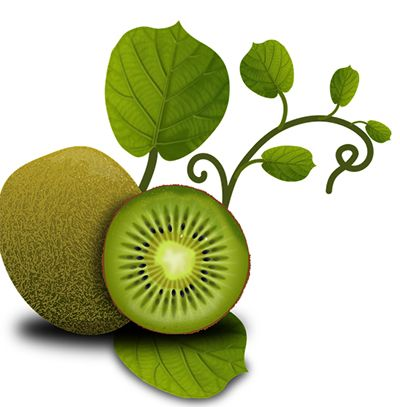 como plantar kiwi fruta