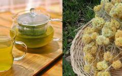 Chá de marcela: benefícios, como fazer e contraindicações.