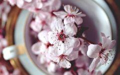 Chá de Rosa Branca, Para Corrimento, Inflamação no Útero e  Outras Indicações