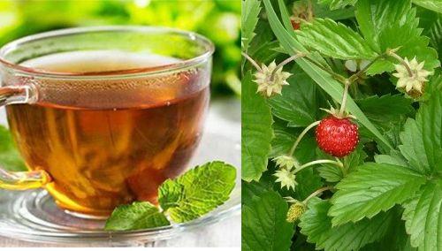 Chá de folha de morango é bom para quê?