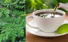 Descubra todos os benefícios da moringa e como preparar o chá.