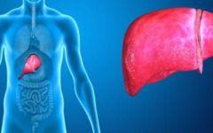 Gordura no Fígado: o que é, sintomas, como combater