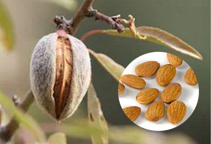 o-que-e-amendoas